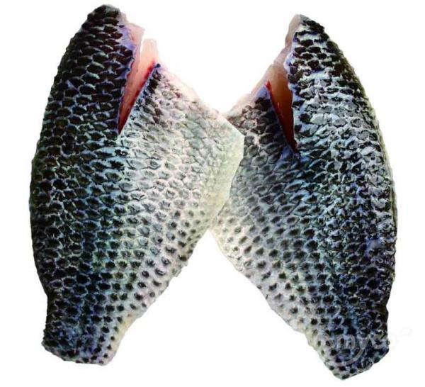 Frozen Tilapia Fillets skinon